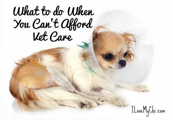 Can't Afford Vet Care
