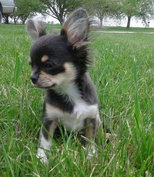 Chi in grass