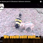 The Hotdog and the Bee