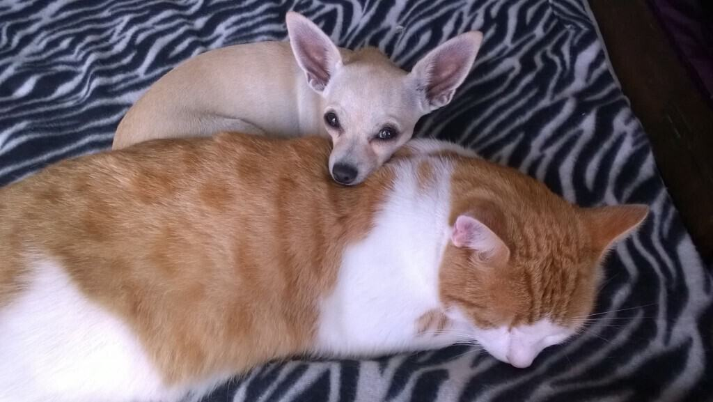 cat and chi