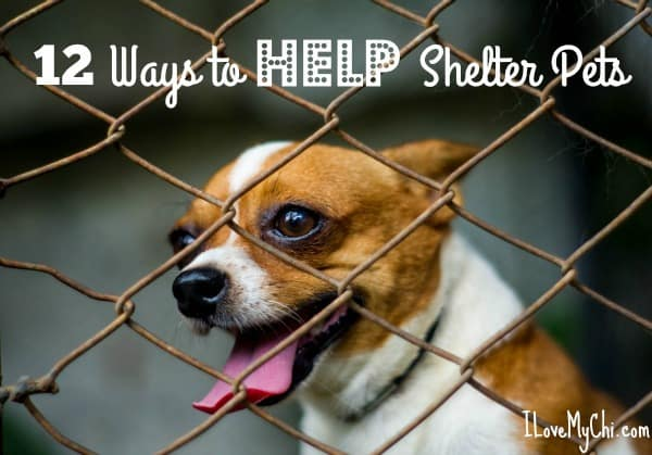 12 ways to help shelter pets