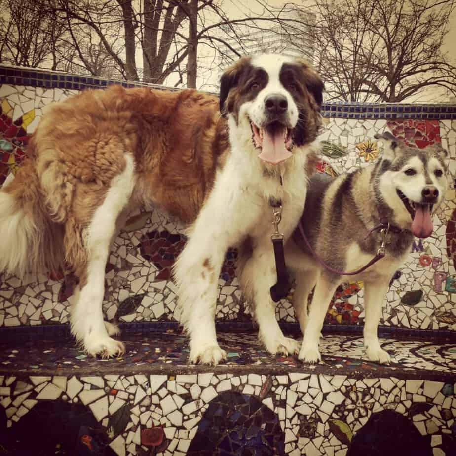 Ossian and Koda