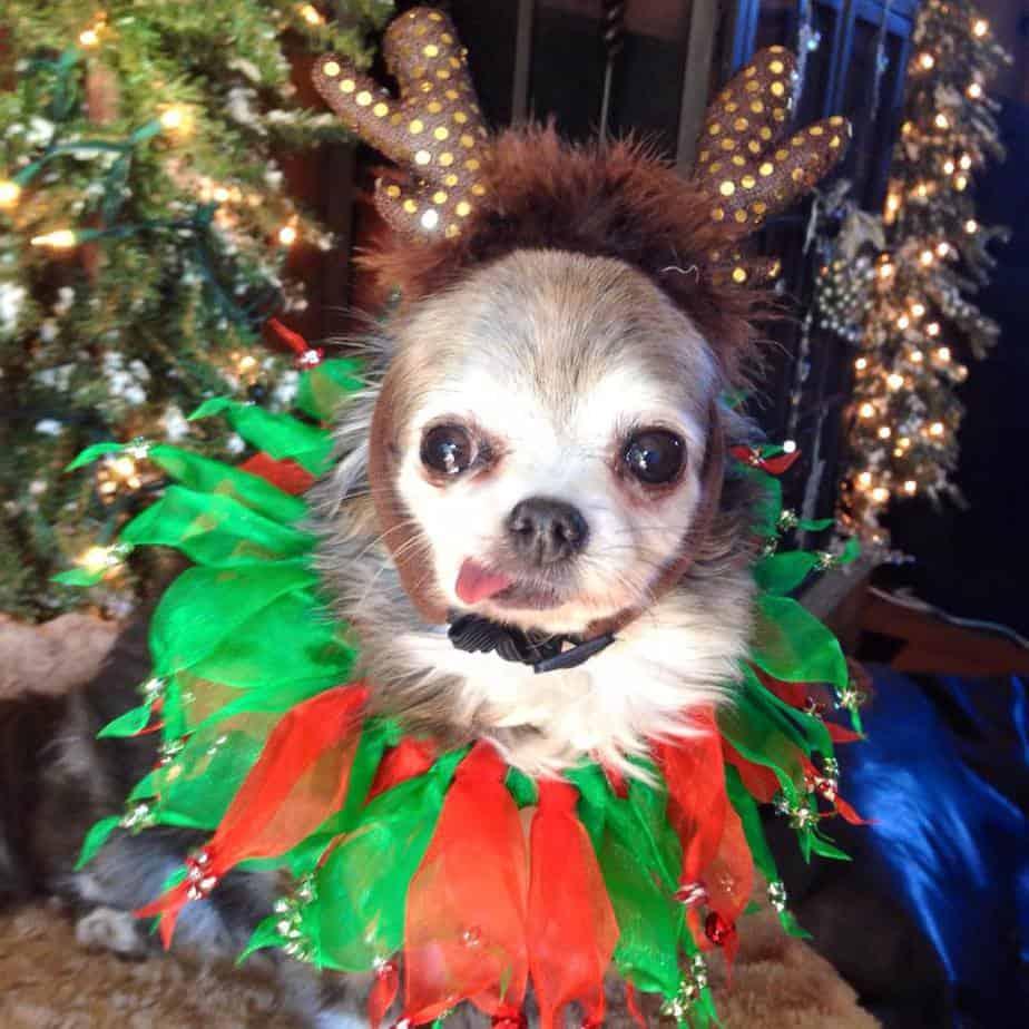 funny christmas chi