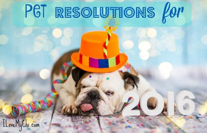 pet resolutions for 2016