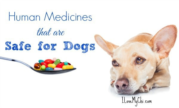 Giving Human Medicine To Dogs