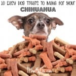 10 Easy Dog Treats to Make for Your Chihuahua