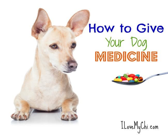 How To Give A Dog Medication With Food