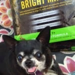 Helping Dogs to Age Gracefully with Purina Pro Plan #BrightMind