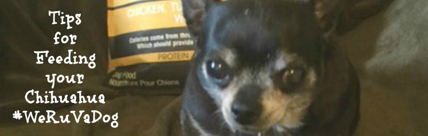 Tips for Feeding Your Chihuahua #WeruvaDog