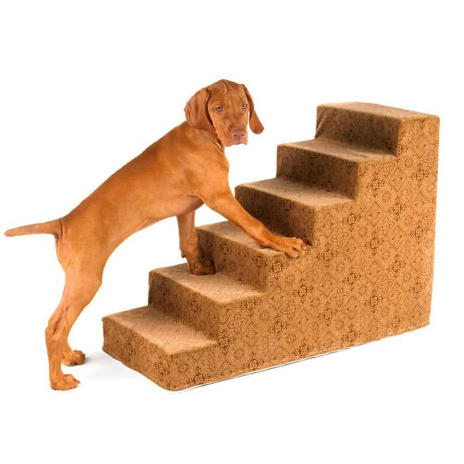 Best Ramps Or Steps For Small Dogs