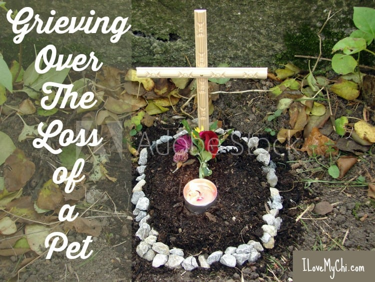 Grieving Over The Loss of a Pet