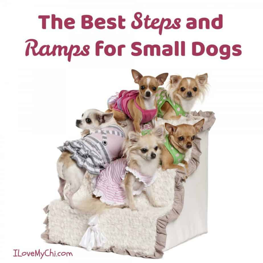 group of chihuahua dogs standing on pet steps