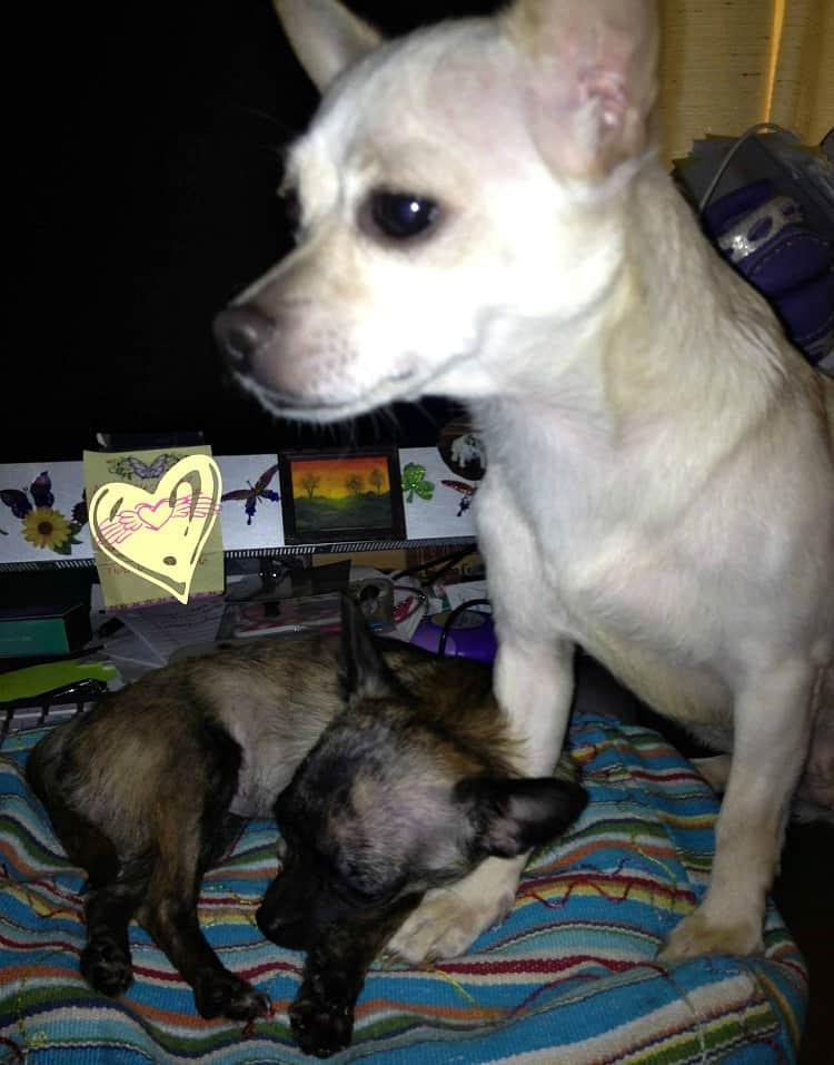 twink and mama 2