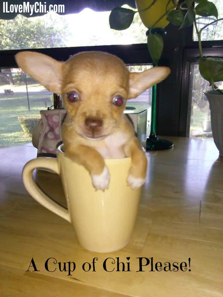 A cup of chi please!