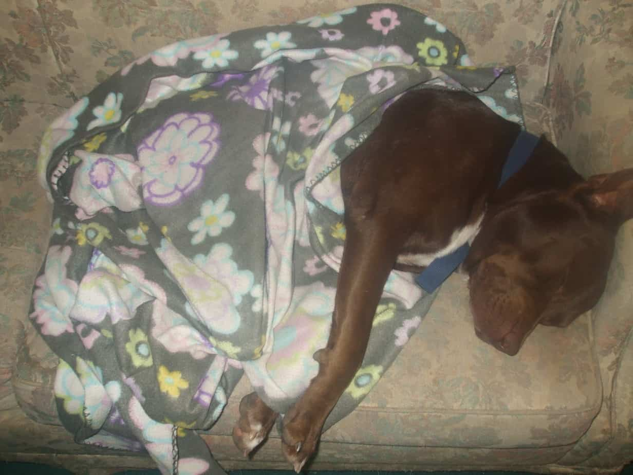 Laura's Story of Hershey and Weinie