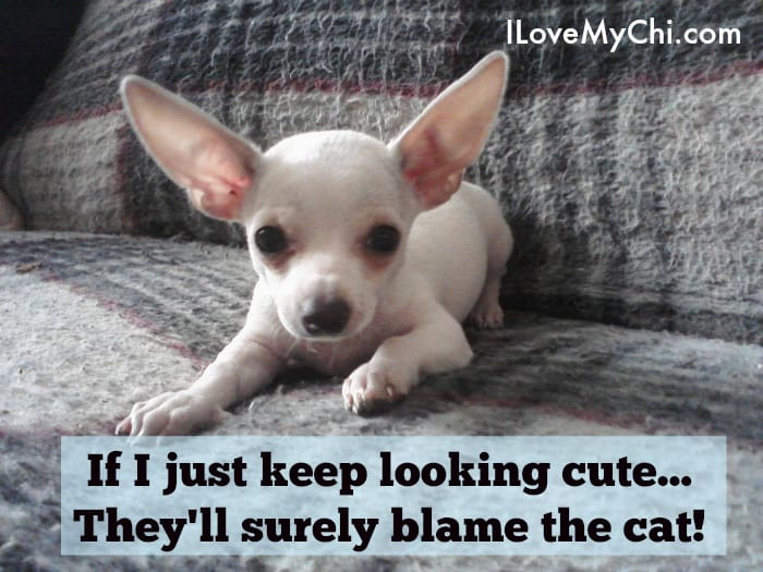 blame the cat