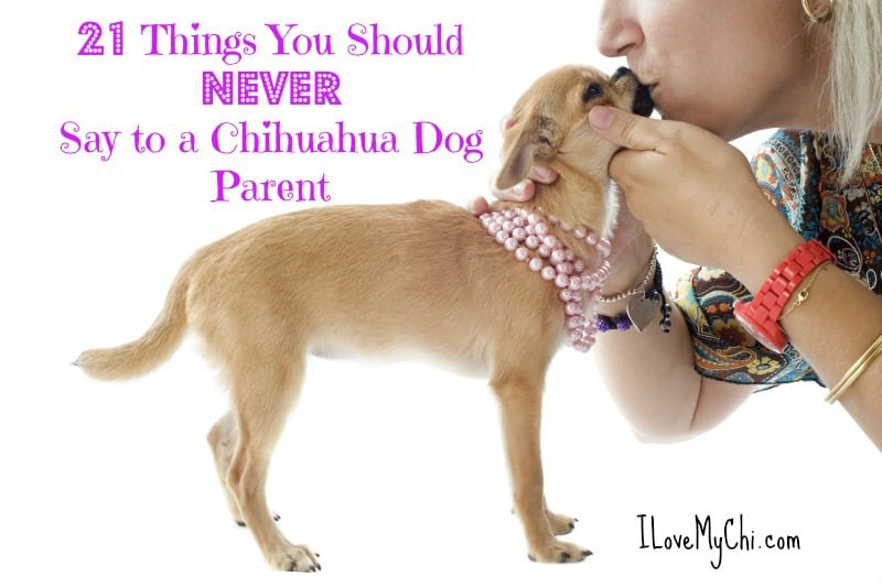 21 Things NEVER to Say to a Chihuahua Dog Parent