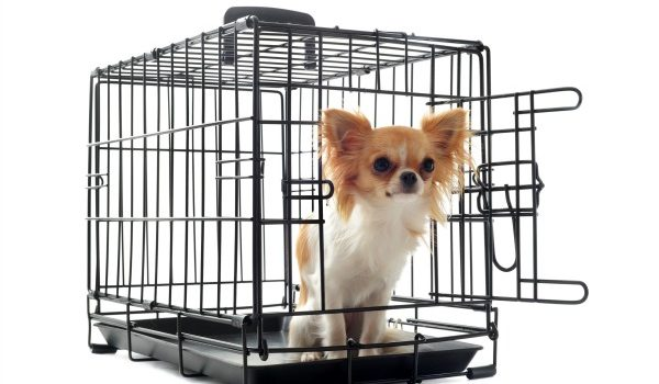 To Crate or Not to Crate: That is the Question