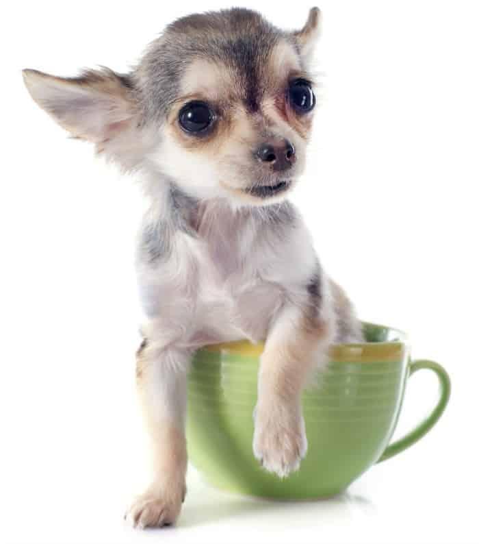 mug and chi700