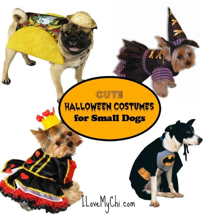 cute halloween costumes for small dogs - Halloween Costume For Small Dogs