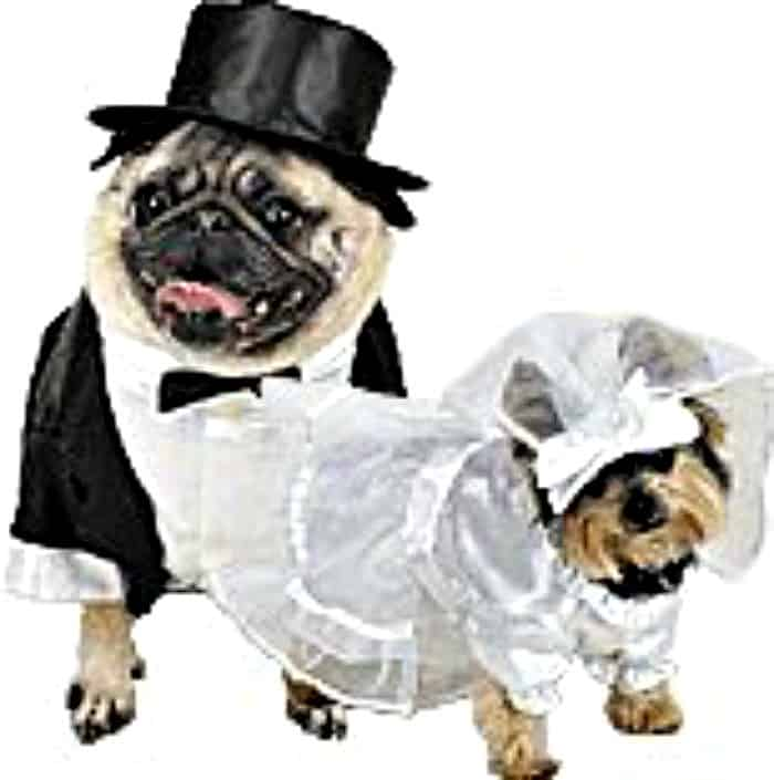 bride gown for dogs