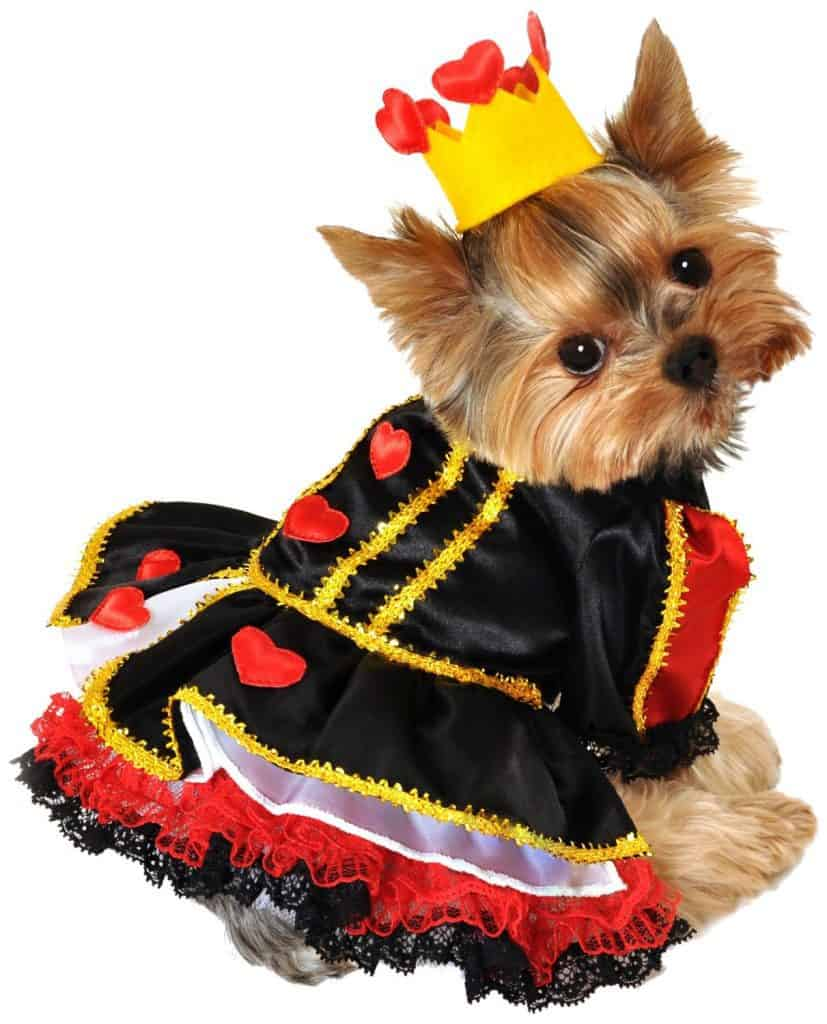 Queen of hearts costume for dogs
