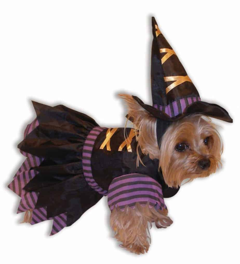 witch outfit for small dog