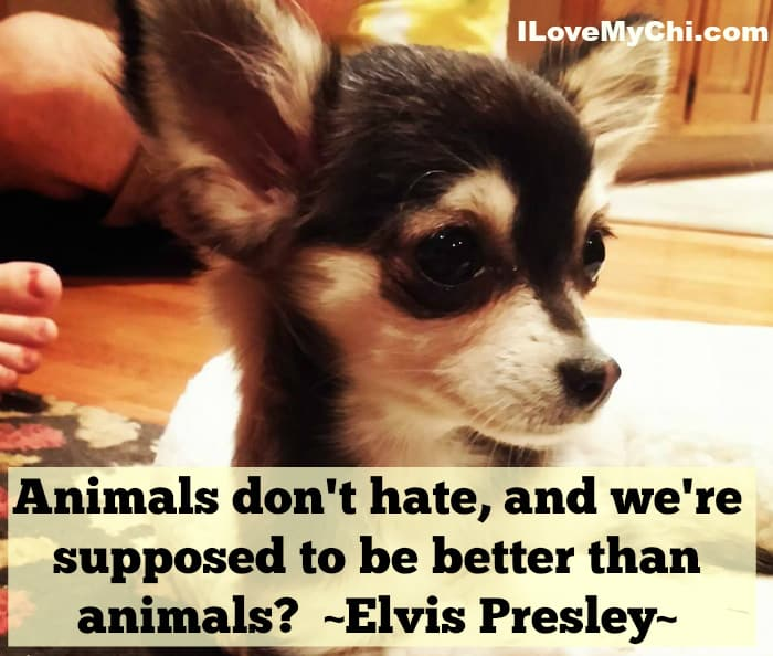 animals dont hate