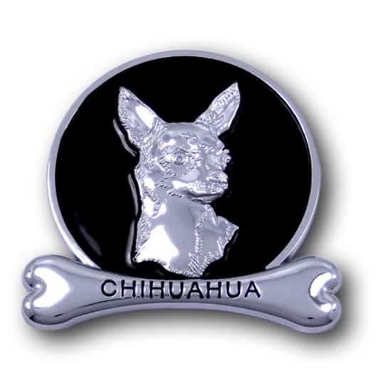 chihuahua chrome animals