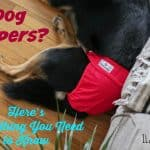 Dog Diapers? Here's Everything You Need to Know