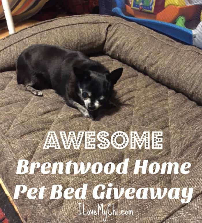 Awesome Brentwood Home Pet Bed Giveaway