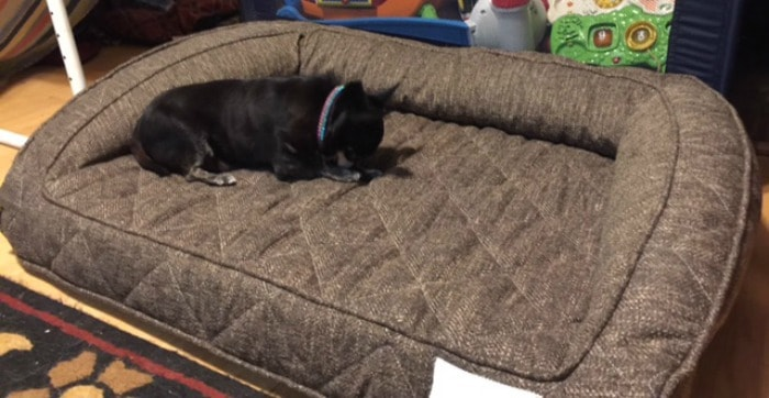long-shoot-of-kilo-on-brentwood-pet-bed