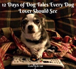 12 Days of Dog Tales Every Dog Lover Should See