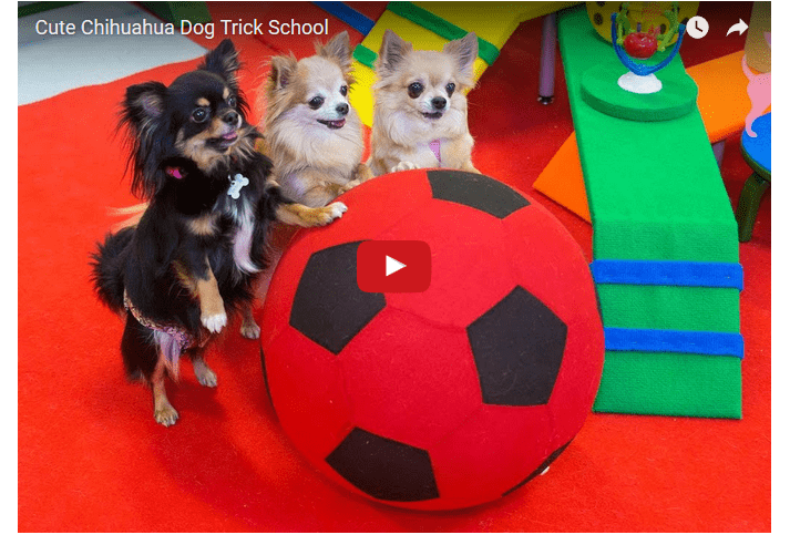 Chi Trick School