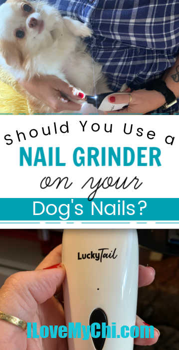 chihuahua getting nails grinded and photo of a nail grinder