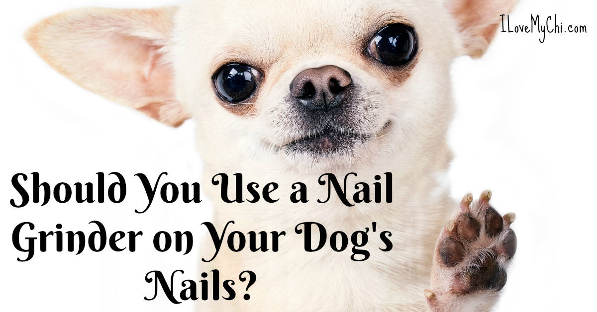 Should You Use a Nail Grinder on Your Dog's Nails?