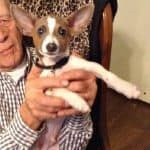 Dixie's Chi Story of Pinto Bean
