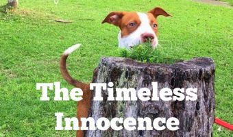The Timeless Innocence of Dogs