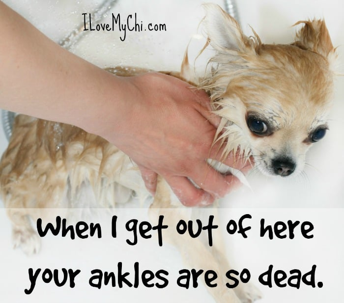 cute dog meme