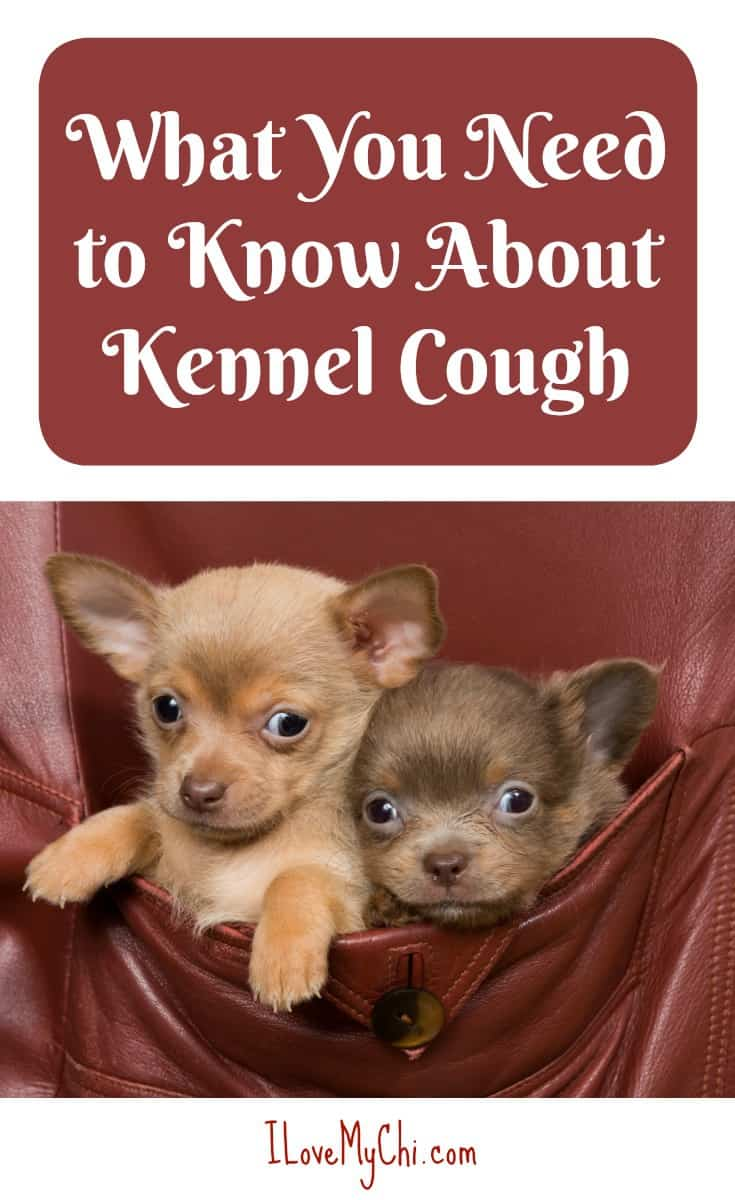 This is the  post you need to read  find out what you need to know about kennel cough