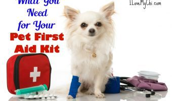 What You Need for Your Pet First Aid Kit
