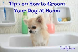 Tips on How to Groom Your Dog at Home