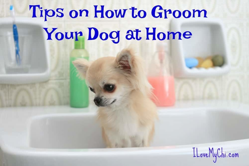 groom your dog