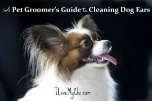 A Pet Groomer's Guide to Cleaning Dog Ears