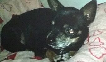 Janel's Chi Story of Lulu