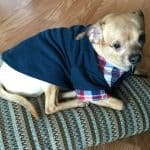 PeeWee's Chi Story