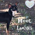 Meet Lucas