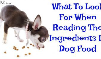 What To Look For When Reading The Ingredients In Dog Food