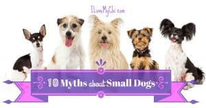 10 Myths about Small Dogs