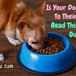 Is Your Dog Allergic To Their Food? Here's How To Tell